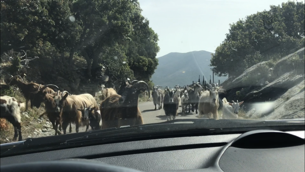 Cómo desplazarse en Córcega